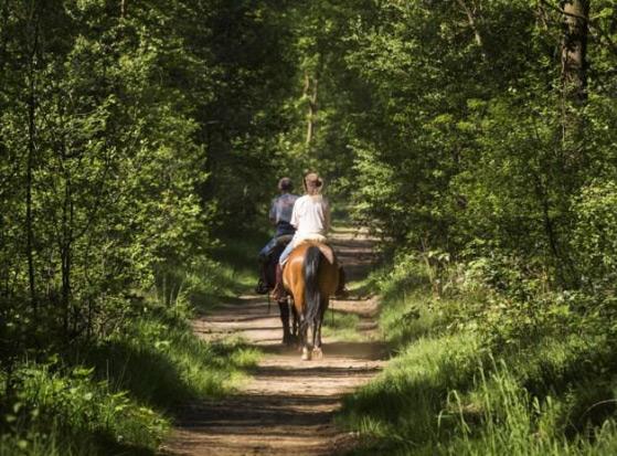 op stap met uw paard