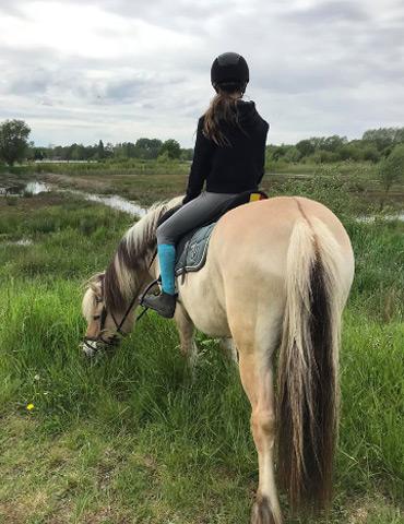 paardenhotel intro img