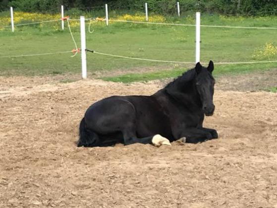 uw paard op hotel